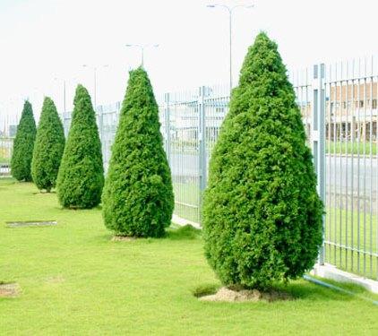 Những loài cây nào không nên trồng trong nhà